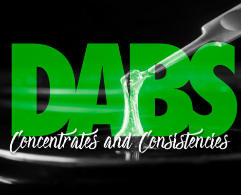 Cannabis Dabs and Concentrates