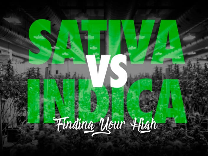 What is the difference between Sativa and Indica Cannabis Strains