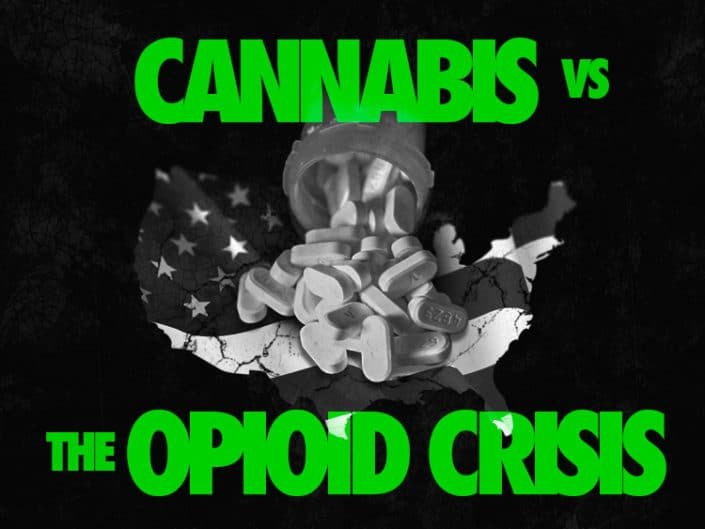 Cannabis vs the Opioid Crisis