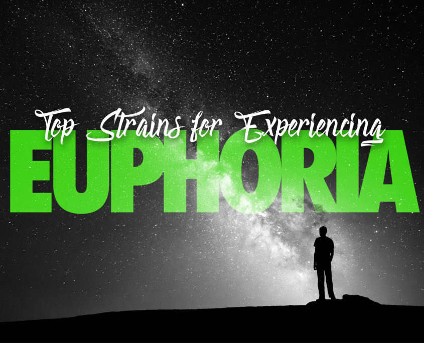 Cannabis Strains to Experience Euphoria