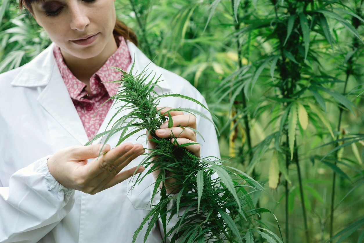 Cannabis in Washington State