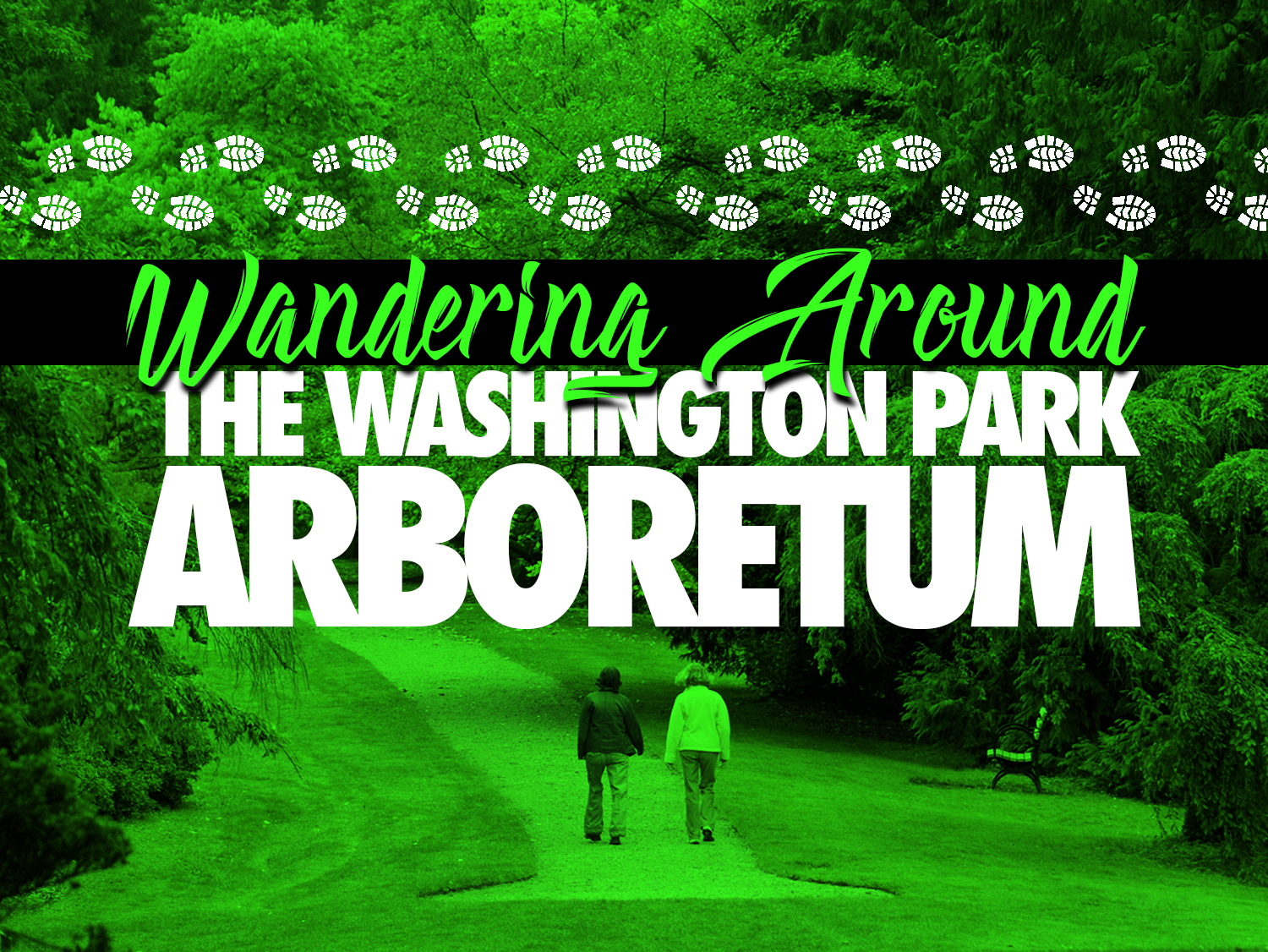 Wandering Around The Washington Park Arboretum