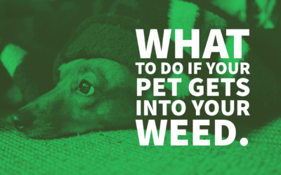 What to Do If Your Pet Gets Into Your Weed