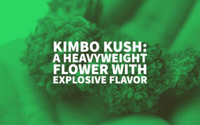 Kimbo Kush: A Heavyweight Flower With Explosive Flavor
