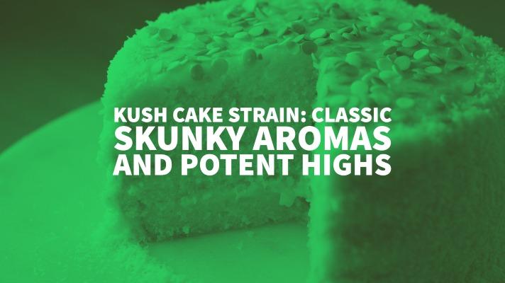 Kush Cake Strain: Classic Skunky Aromas And Potent Highs