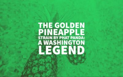 The Golden Pineapple Strain By Phat Panda: A Washington Legend