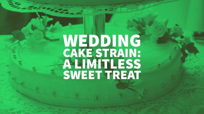 Wedding Cake Strain: A Limitless Sweet Treat