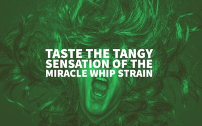 Taste The Tangy Sensation of the Miracle Whip Strain