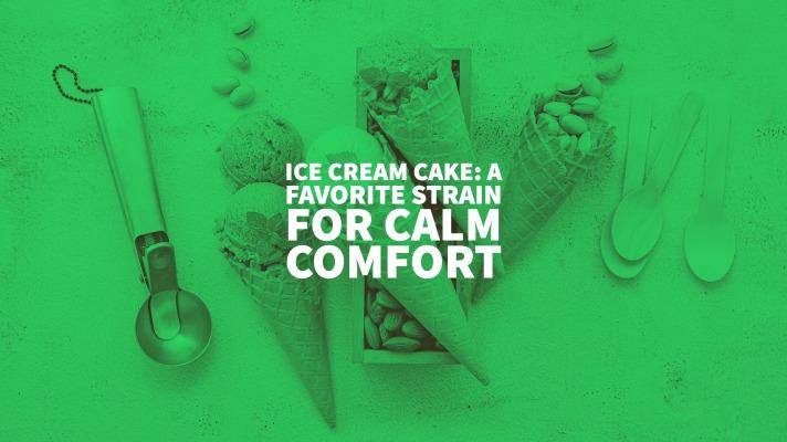 Ice Cream Cake: a favorite strain for calm comfort